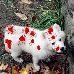 white-dog-in-fall1